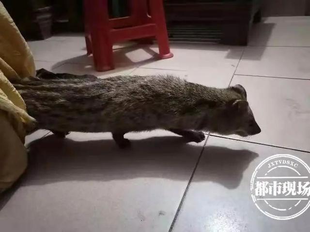 """""""警察同志,大家赶紧来!我们家来啦一只相貌独特的动物."""