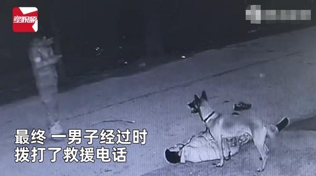 主人醉倒路边宠物狗忠心死守身旁!连声吼叫求救 路人却反被吓跑 全球新闻风头榜 第3张