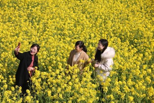 3月15日是什么节日,3月15日中国·襄城第四届首山油菜花旅游文化节开幕