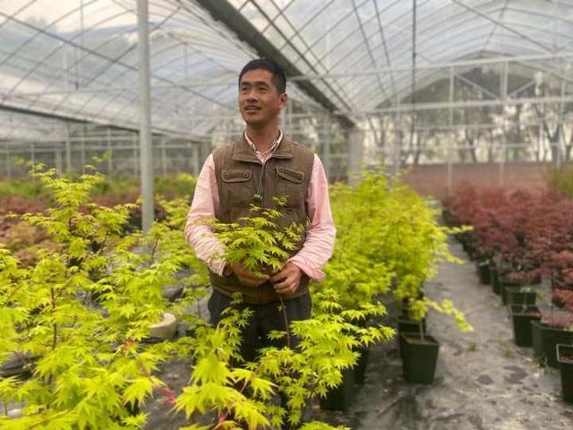 枫叶图片,有图有真相,春天的枫叶实在太迷人了,浙江有人卖它年入百万