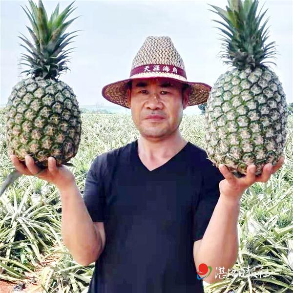 """新品种水果,凤梨新品种""""嫁""""到菠萝的海"""