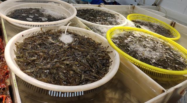 """河虾图片,吃河虾的季节到了,价格比往年贵,最便宜的也要""""3""""字头"""