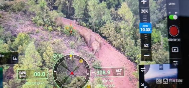 云南北迁象群持续在昆明双河乡活动,当地储备象食15吨,投喂3.6吨 全球新闻风头榜 第1张