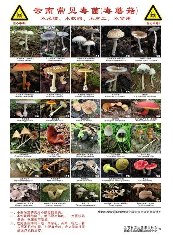 咖啡色图片,昆明一办公室长出蘑菇上热搜,野生菌可能有毒,千万别随意采食