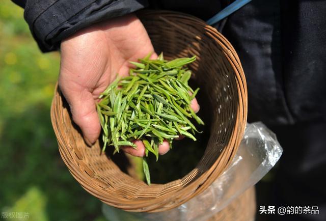 绿茶的品种有哪些,茶叶的分类-六大茶系之绿茶