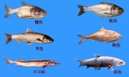 鱼类的生长规律和影响鱼类生长的因素
