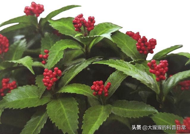 被子植物有哪些,有花植物——基部被子植物