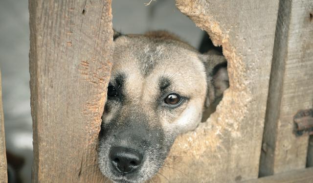 流浪狗的誕生,並非愛狗人士遺棄,它只是一個時代的犧牲品罷了 家有萌寵 第5张