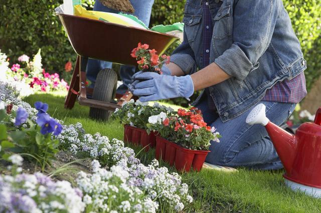 """草花品种,7种""""便宜花"""",我每年这个时候入手,都是开花小能手,很划算"""