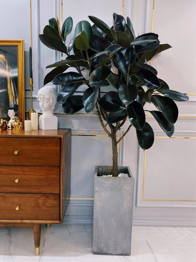 """巨好养!推荐8款高颜值又好养的""""室内绿植"""",让家充满生机活力"""