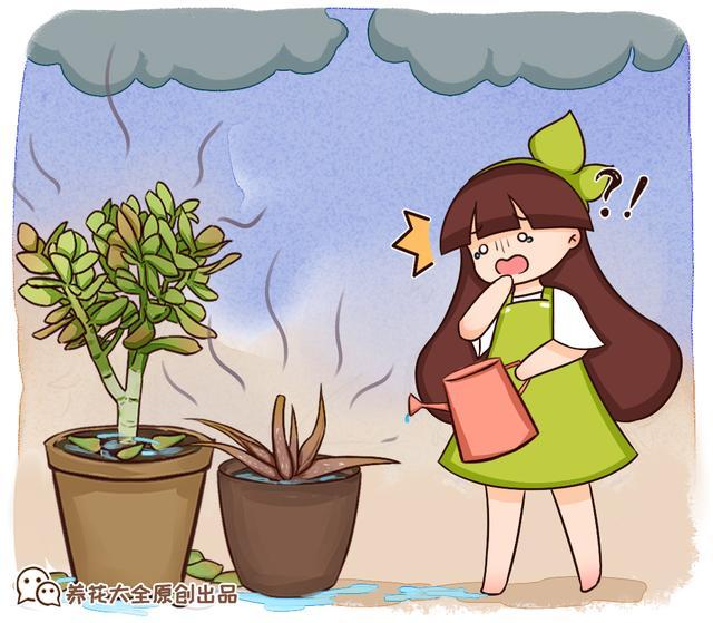 夏天的花有哪些,10种花,夏天浇水死得快,下雨天更要小心