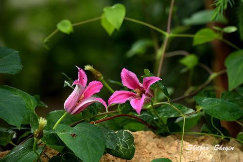 植物世界丨国家一级重点保护野生植物名录,一定要认识,小心犯罪