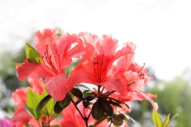 古代祝福语,40首花朝诗词:共贺百花生辰,送你五彩斑斓的春天!