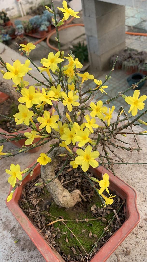 春天有哪些花开,春天常见的花,看完你就都认识,认花再也不求人