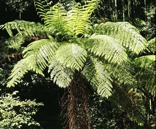 植物活化石有哪些,20种第四冰期孑遗植物,您看看哪个眼熟