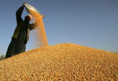 2021年中国粮价是否会大幅度增涨?