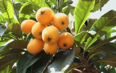 有院子别空着,种3种果树,当年挂果,养眼好吃,年年结果多