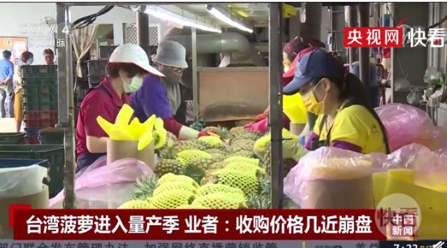 台湾菠萝收购价格几近崩盘 8元新台币一斤已近成本价 全球新闻风头榜 第1张