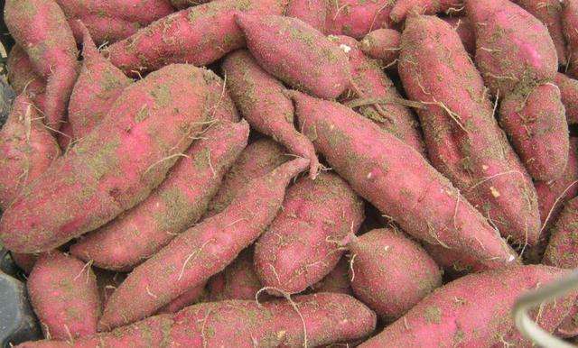 红薯的吃法大全集,爱吃地瓜的一定要收藏,教你5种简单美味的吃法,好吃极了