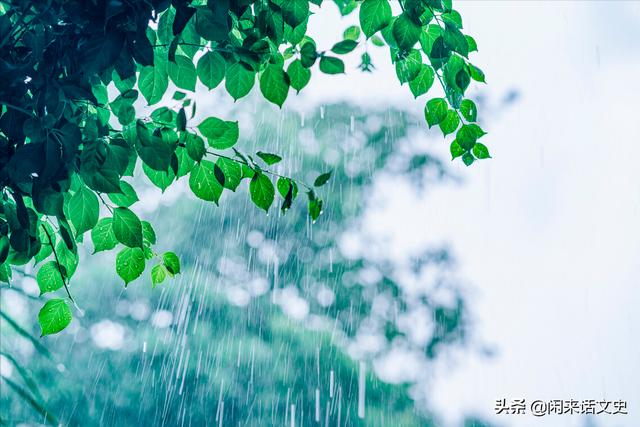杨万里的诗有哪些,杨万里在小雨中写的一首诗,幽默风趣,把自然之美写得无以伦比