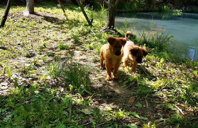 4隻流浪狗入職阿里,如今一年過去了,它們怎麼樣了? 家有萌寵 第1张