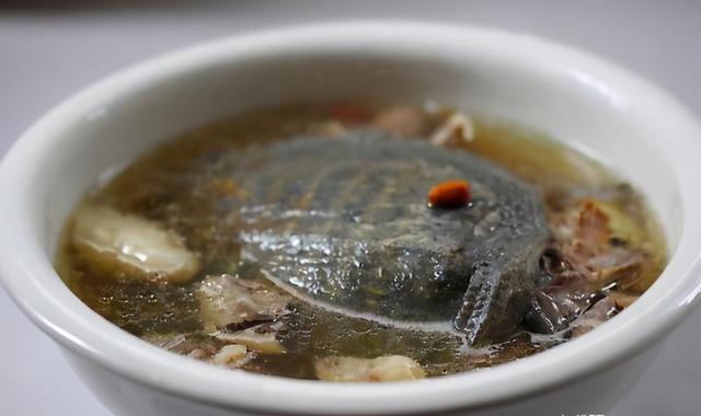甲鱼怎么杀,清蒸甲鱼不会做?试试这个方法,甲鱼鲜嫩,没有腥味