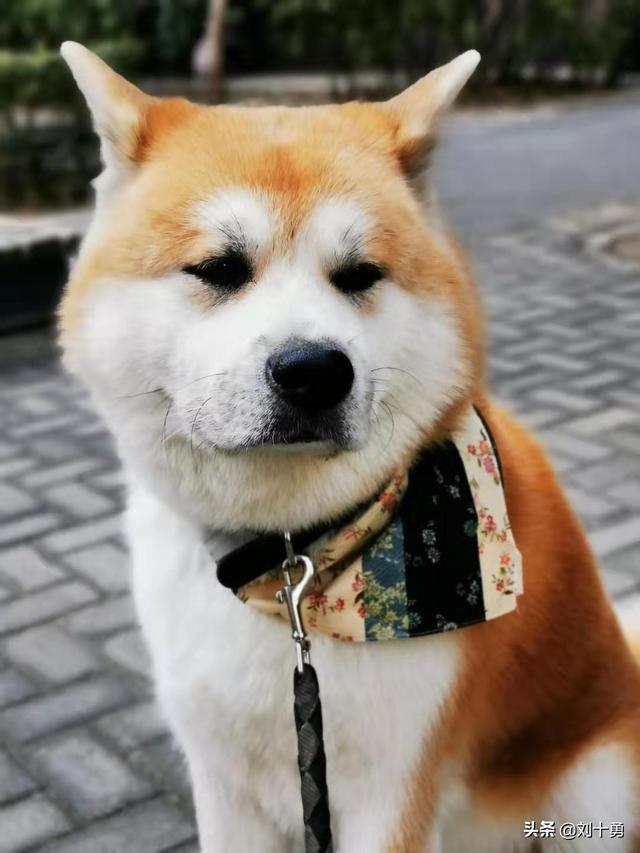关于狗的句子,养狗的至理名言,那句戳中你的心窝
