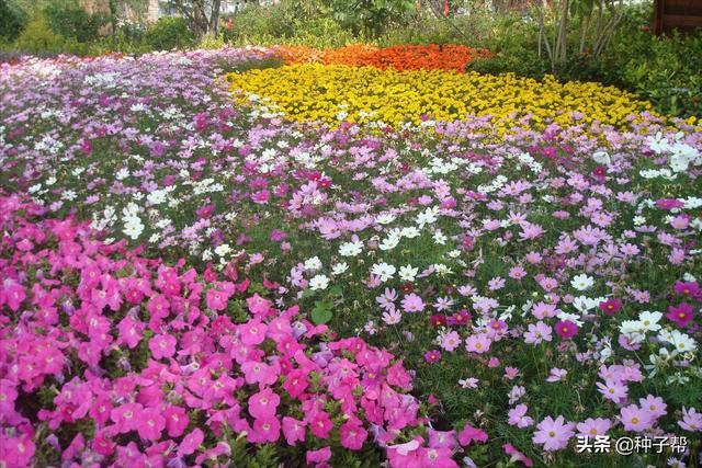 花品种图片,野花组合花卉大全,四季播种、四季开花,花期长,主要很好养活