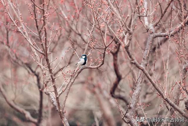 描写春天的优美短句,立春后,找春天
