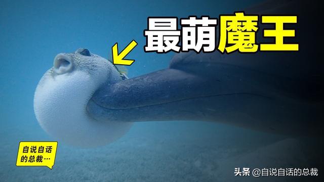 河豚的吃法,河豚:1亿年水中不败,为什么明知是剧毒,人类还要拼死吃河豚