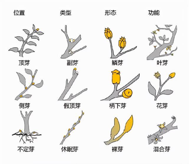 最全的植物形态图解!强烈建议收藏