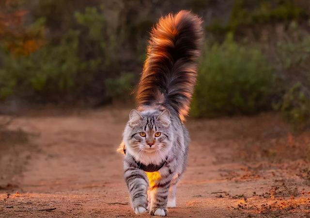 """狗狗品种大全及图片,公认颜值""""最高""""的10种猫,有你喜欢的吗?"""