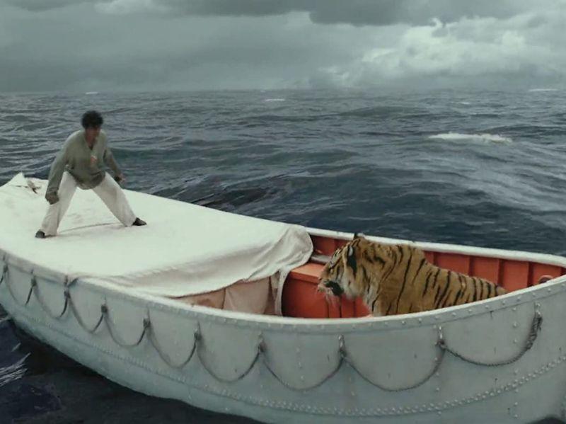 老虎从未踏上船