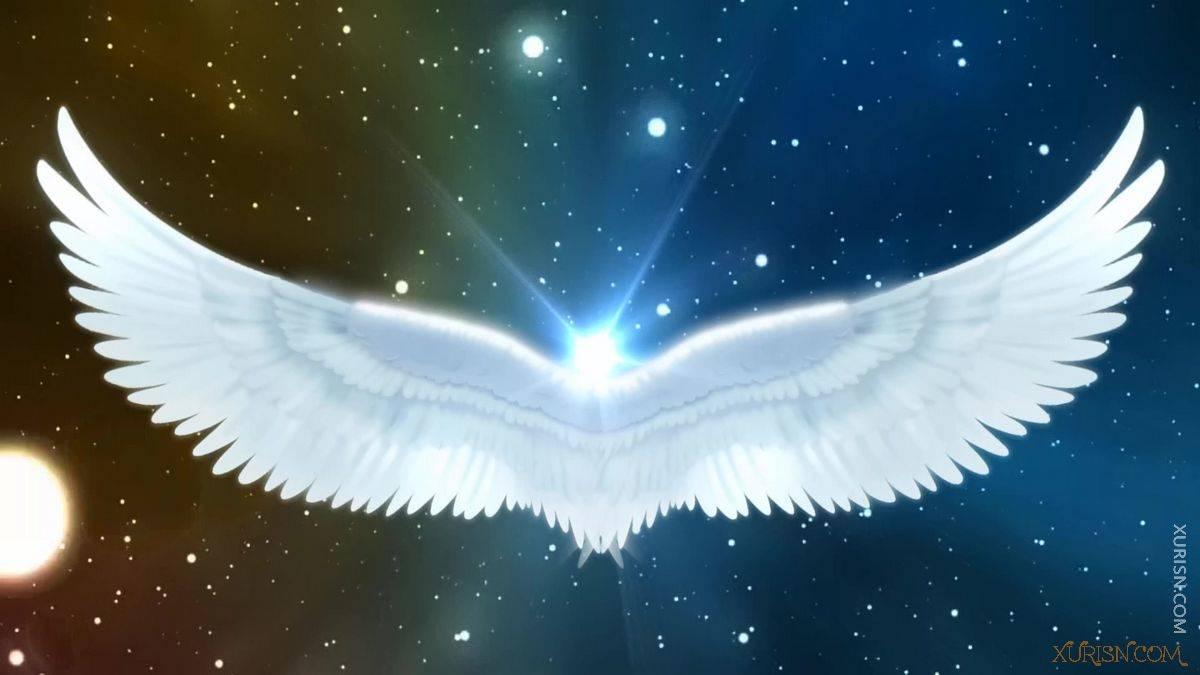 视频素材-11款唯美婚礼新娘出场天使翅膀视频素材集(14)