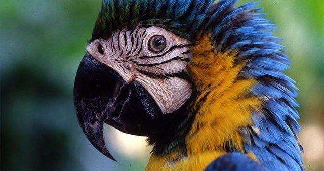 70元海南热带野生动植物园儿童票