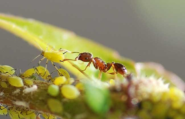 蚂蚁吃糖?被蚂蚁爬过的糖还能吃吗?