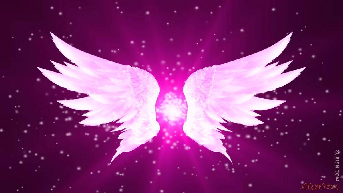 视频素材-11款唯美婚礼新娘出场天使翅膀视频素材集(13)