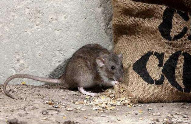 家里放一物绝对没老鼠