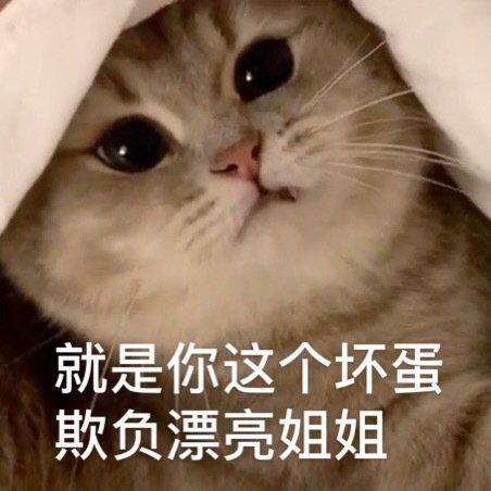 伟嘉猫粮怎么样?养猫攻略,老司机带你养胖猫