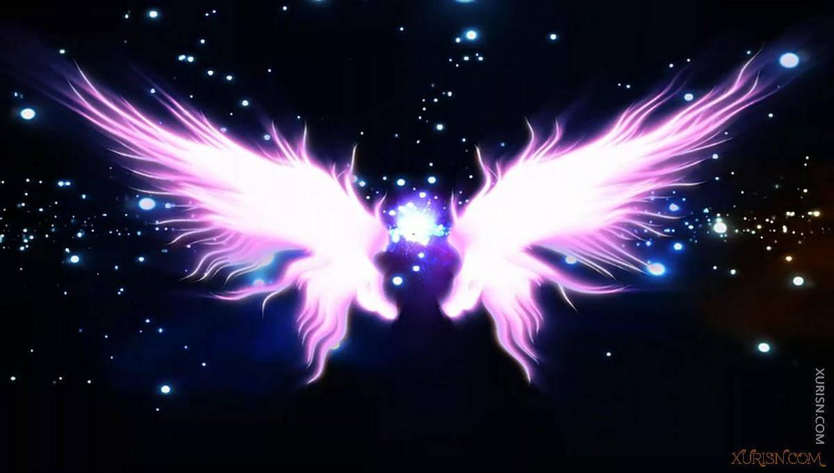 视频素材-11款唯美婚礼新娘出场天使翅膀视频素材集(4)