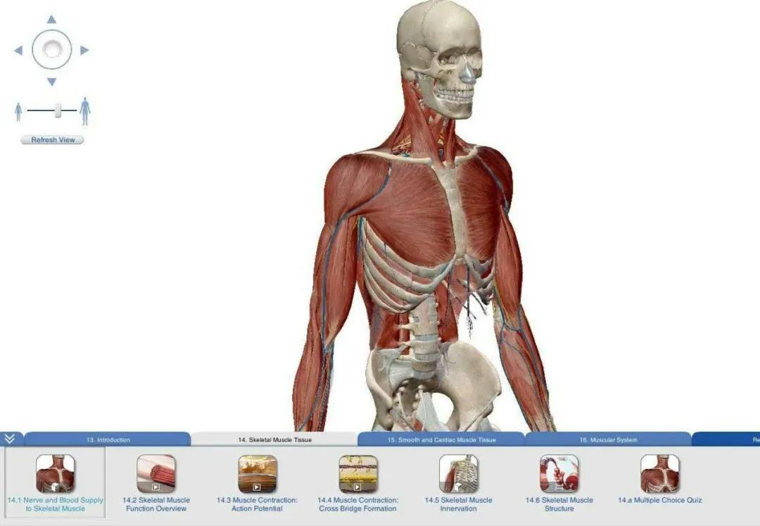 5faf553f1cd1bbb86bd447ae Windows电脑系统的人体结构工具