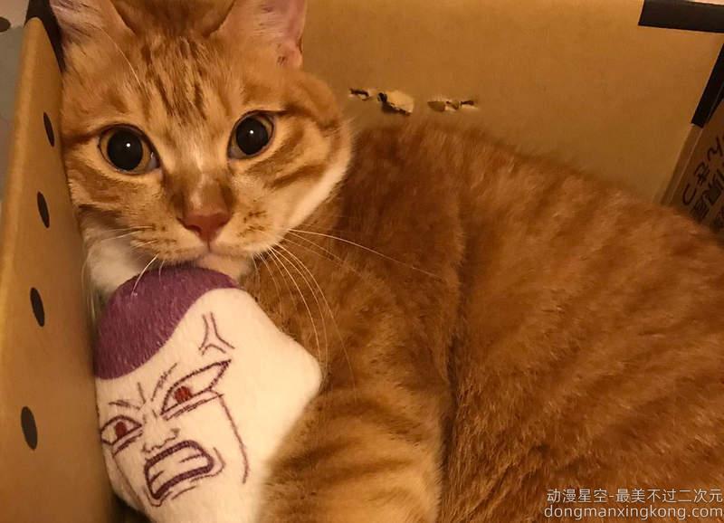 网友票选《动漫界恶之帝王》被做成最多网路梗图跟王者会是谁呢XD(疑)