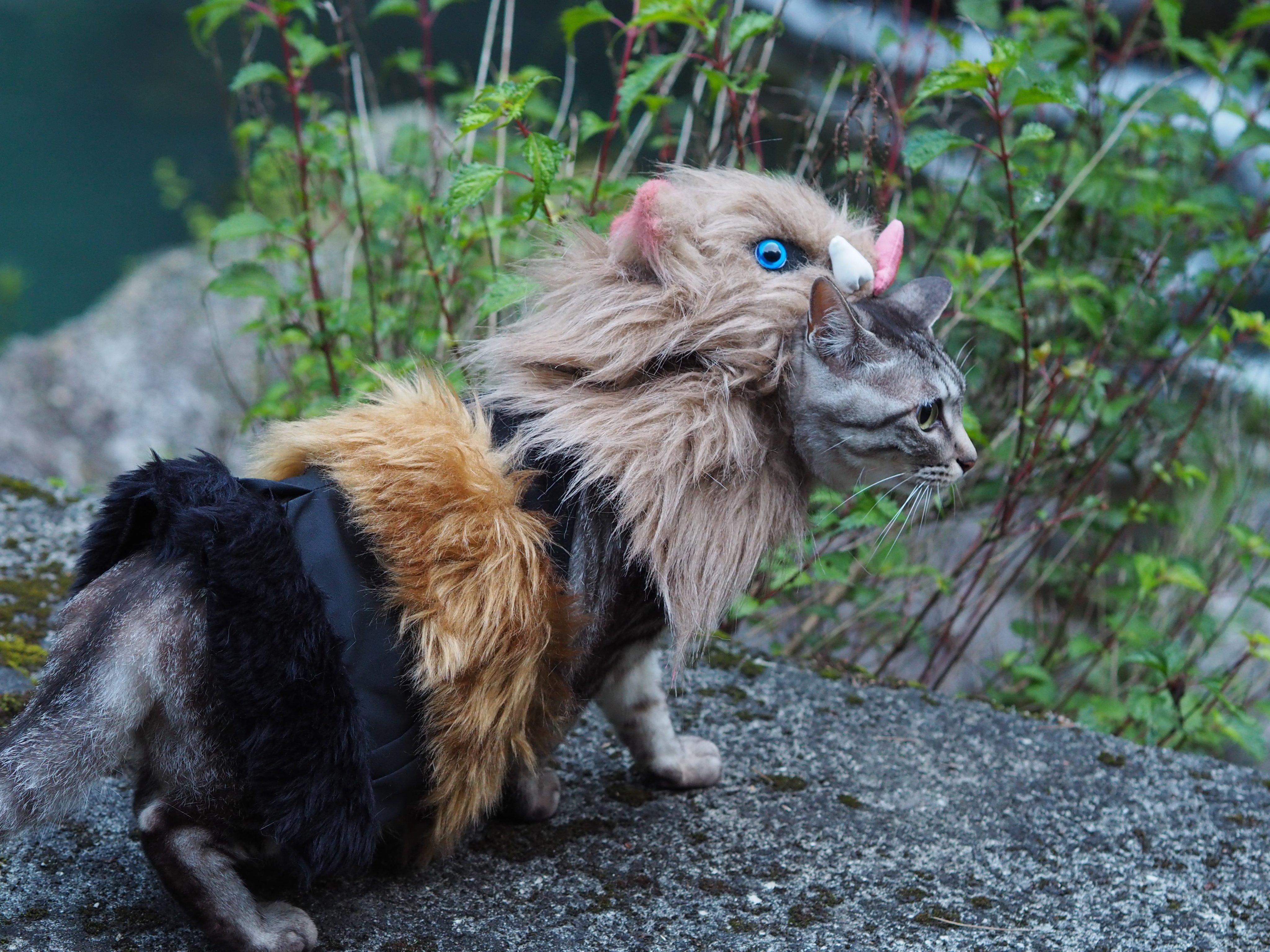 鬼灭之刃 猫之COS