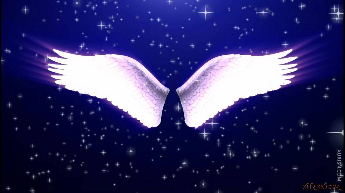 视频素材-11款唯美婚礼新娘出场天使翅膀视频素材集(11)