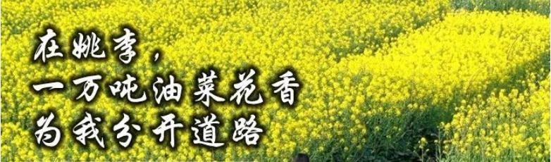 桃紫:在姚李,一万吨油菜花香为我分开道路 雨后故事