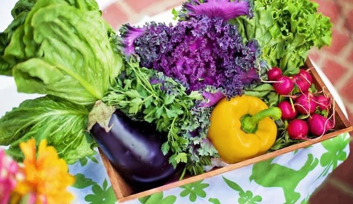 植物酵素多少钱一盒 哪种植物酵素效果好?-日本酵素减肥