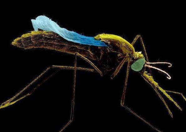 蚊香为什么能杀死蚊子?