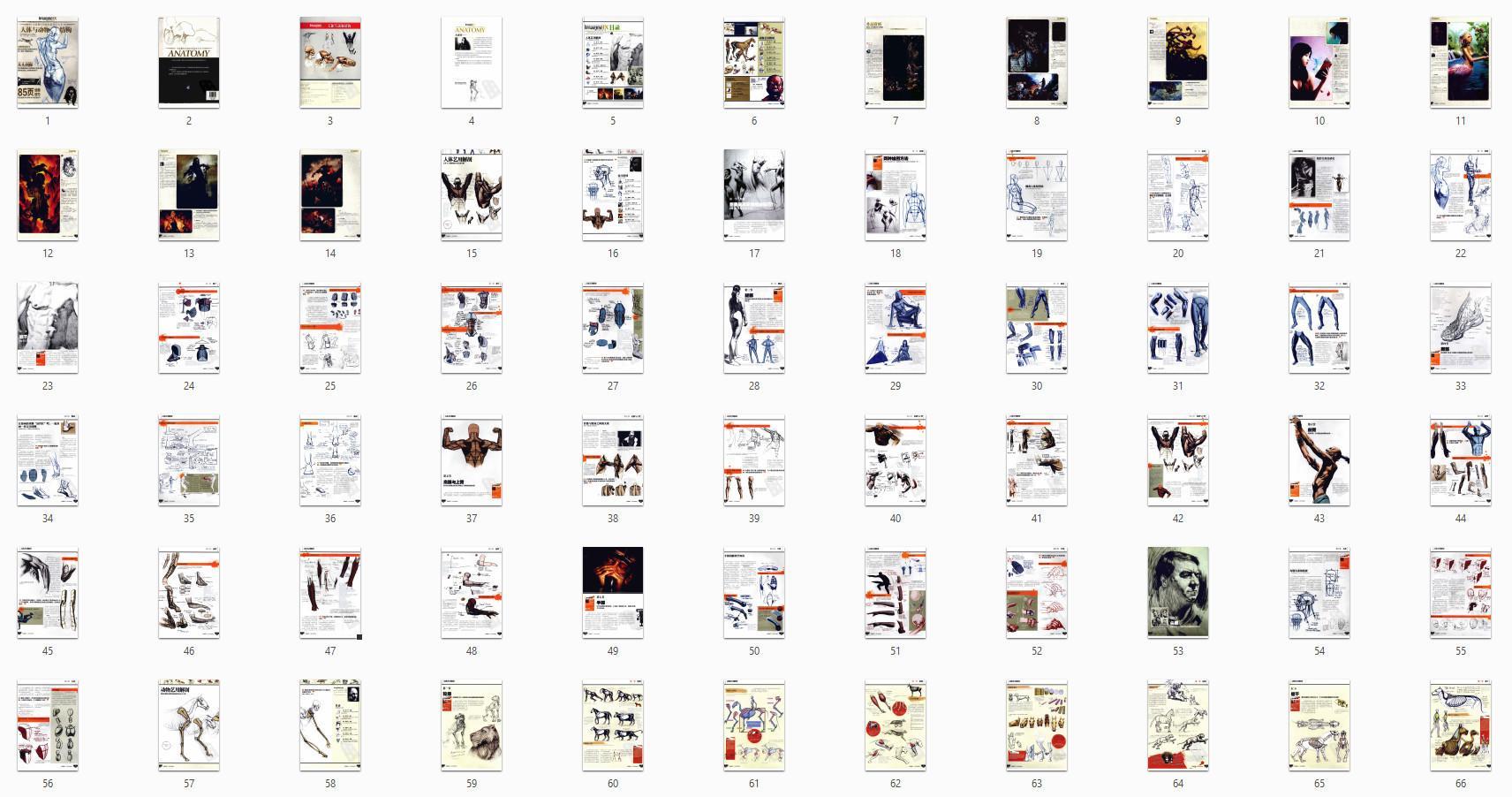 原画绘画教程-全球数位绘画名家技法丛书 人体与动物结构 PDF下载(4)