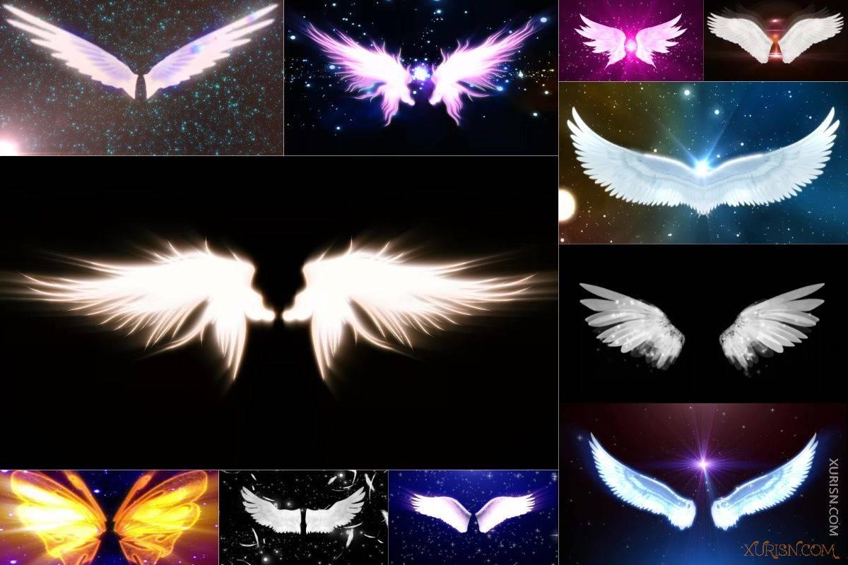 视频素材-11款唯美婚礼新娘出场天使翅膀视频素材集(3)