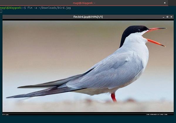 Linux终端怎么查看图像Linux终端怎么查看图像